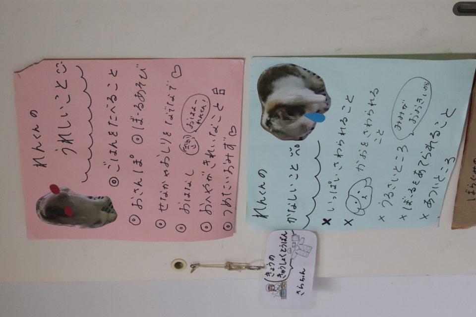 壁に貼ってあるうさぎのお世話の仕方の紙
