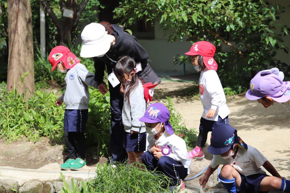 中庭のビオトープを覗いている園児達