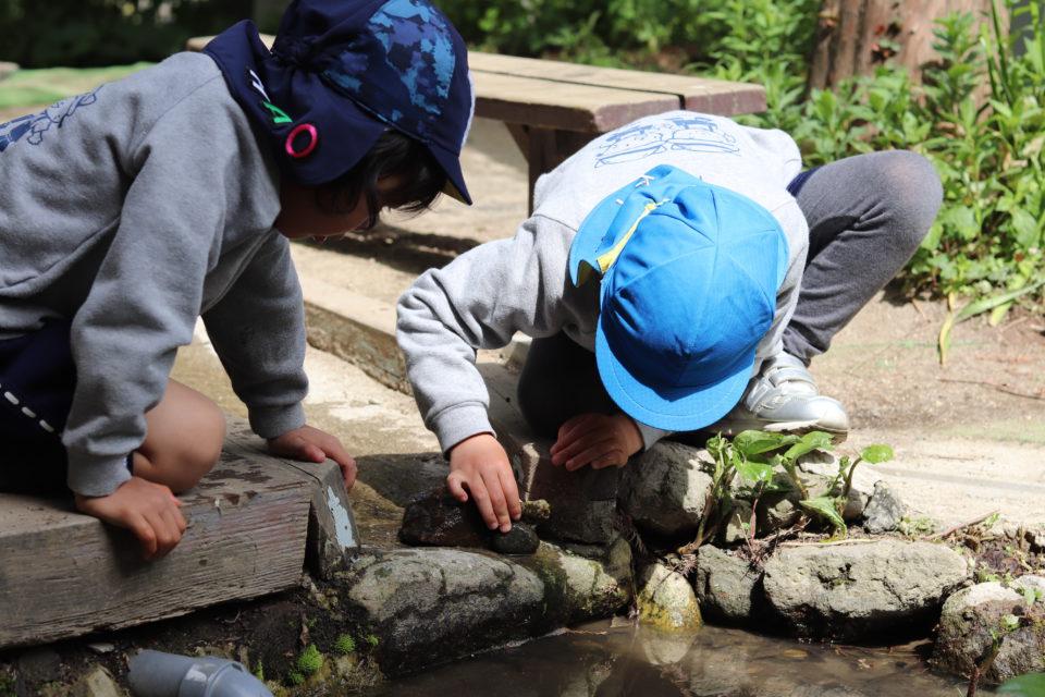 中庭のビオトープを覗き込んでいる園児達