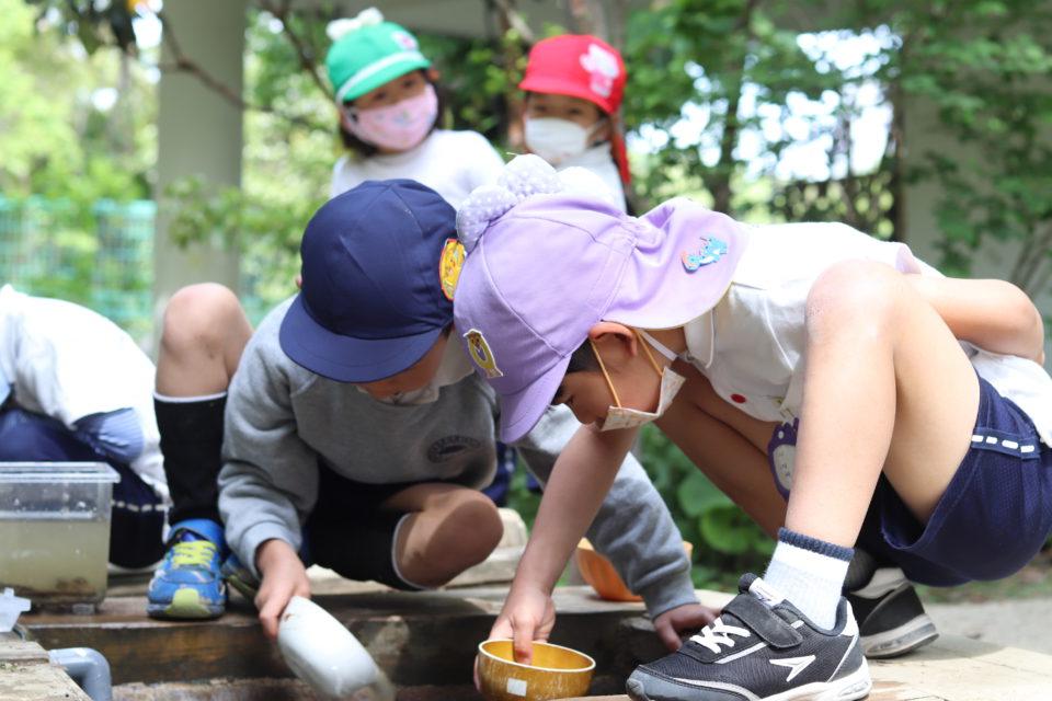 ビオトープの生き物を覗き込んで探している園児達