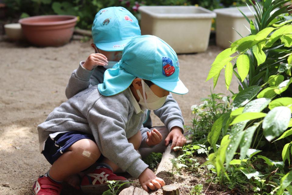 園庭で虫探しをしている園児達