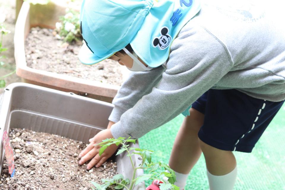 プランターに球根を植えている男の子
