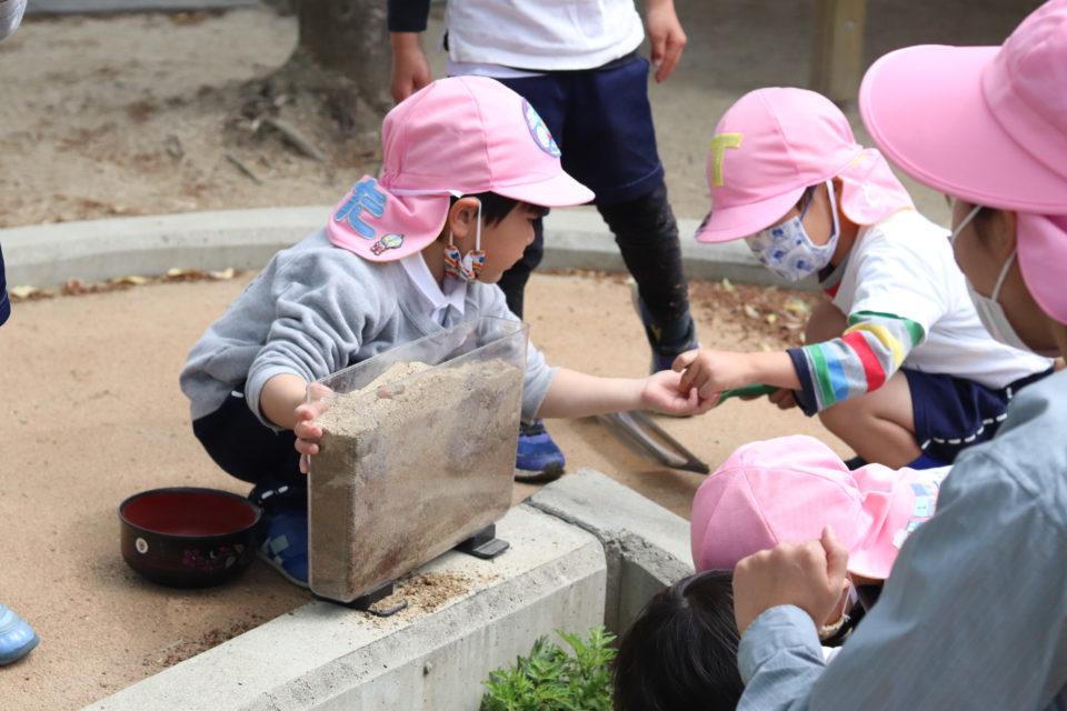 アリの家を作っている園児達