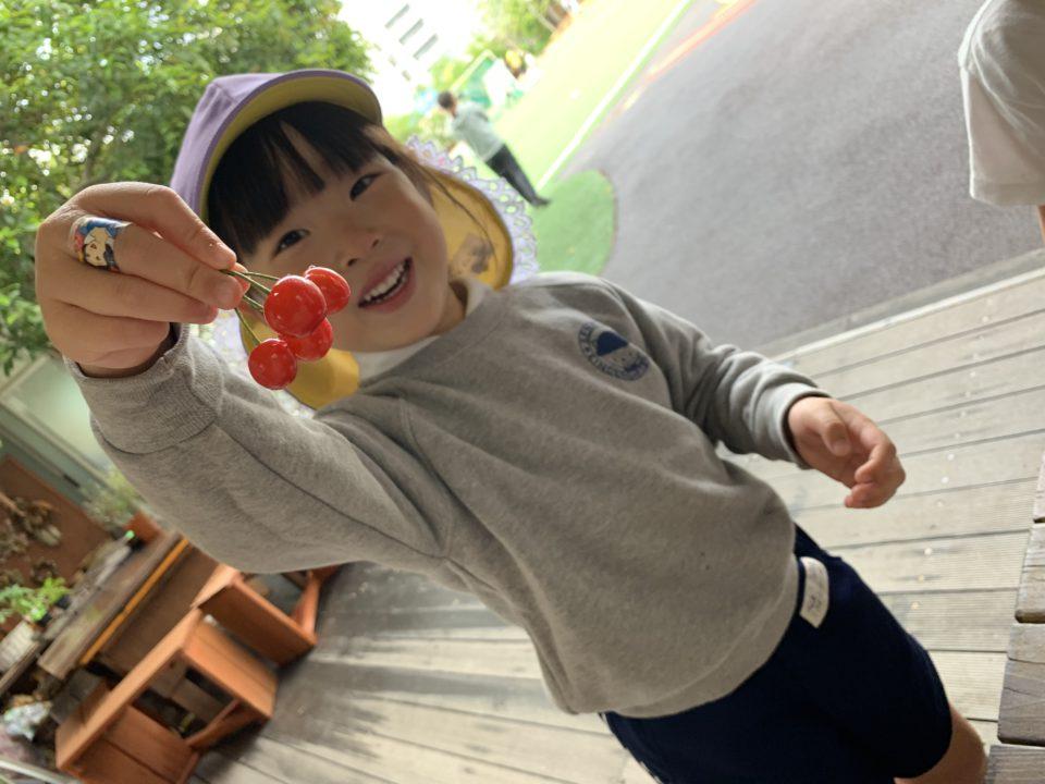 採れたてのさくらんぼを笑顔で見せてくれている園児
