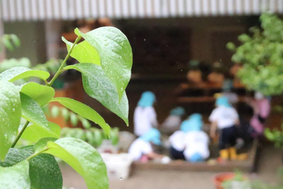 雨の日の幼稚園の様子